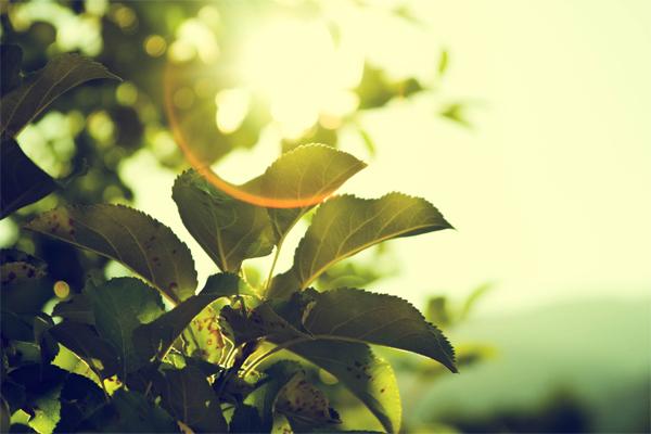 green image - Lithium